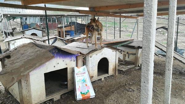 Tierschutzprojekt Italien